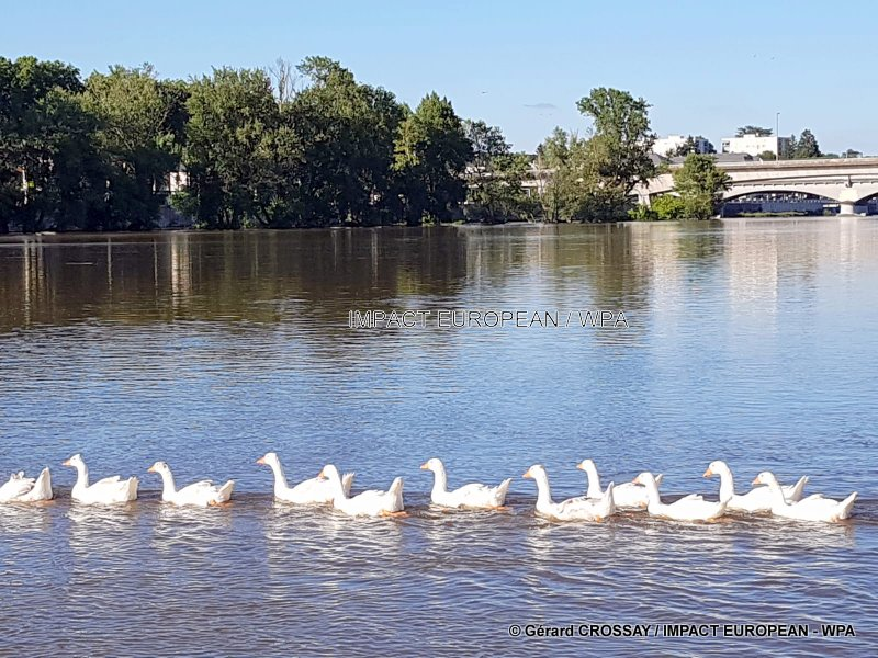 """The Loire, """"the only big wild river"""" in Europe"""